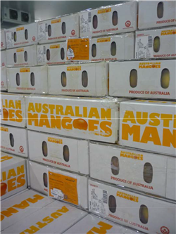 Australian Mangoes - Brisbane Air freight